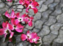 kwiaty na kostce brukowej