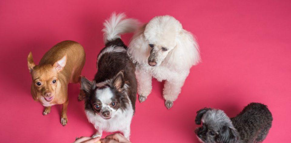 Fotografowanie psów w studio